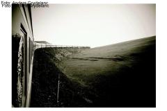 Galleri sort-Hvit 2011
